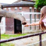 Beste dierentuinen van Europa