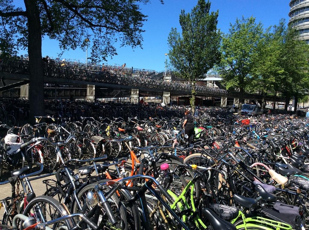 Le bici sono i mezzi di trasporto più utilizzati ad Amsterdam