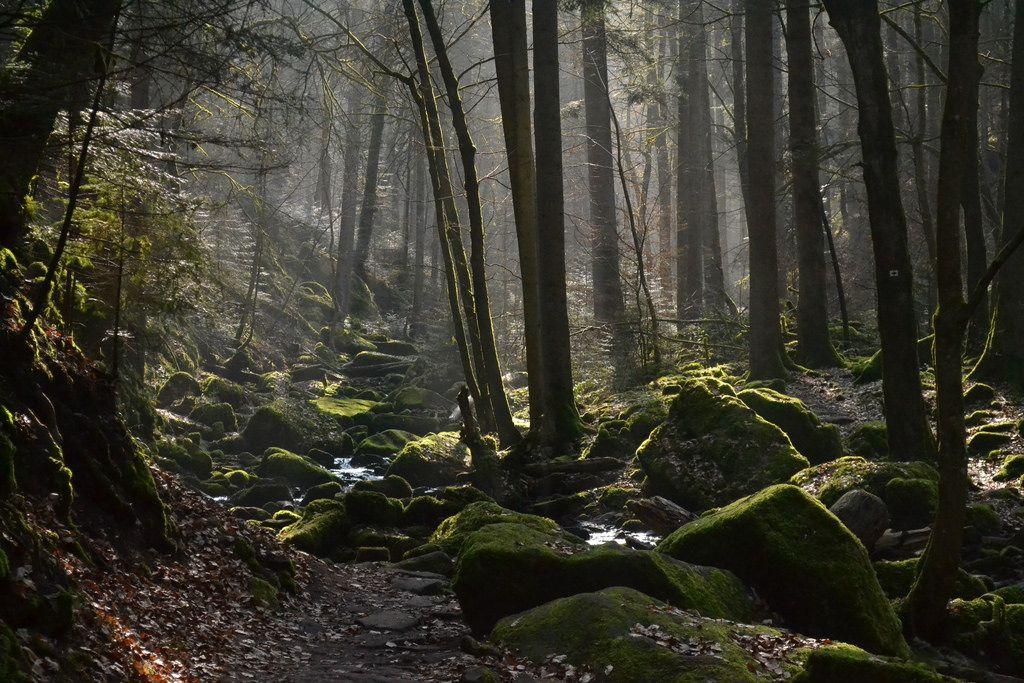 Nacionalni park Schwarzwald