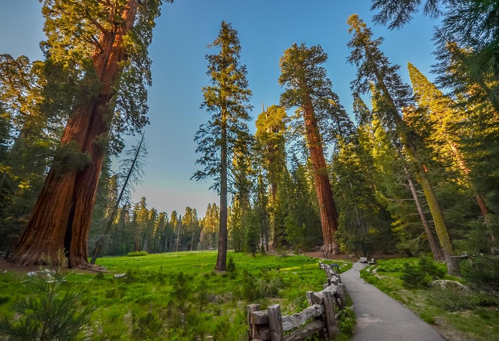Alberi di sequoia giganti nei Parchi nazionali di Sequoia e Kings Canyon, California