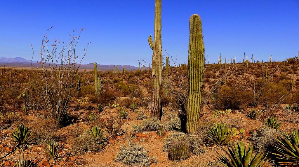 Deserto di Sonora