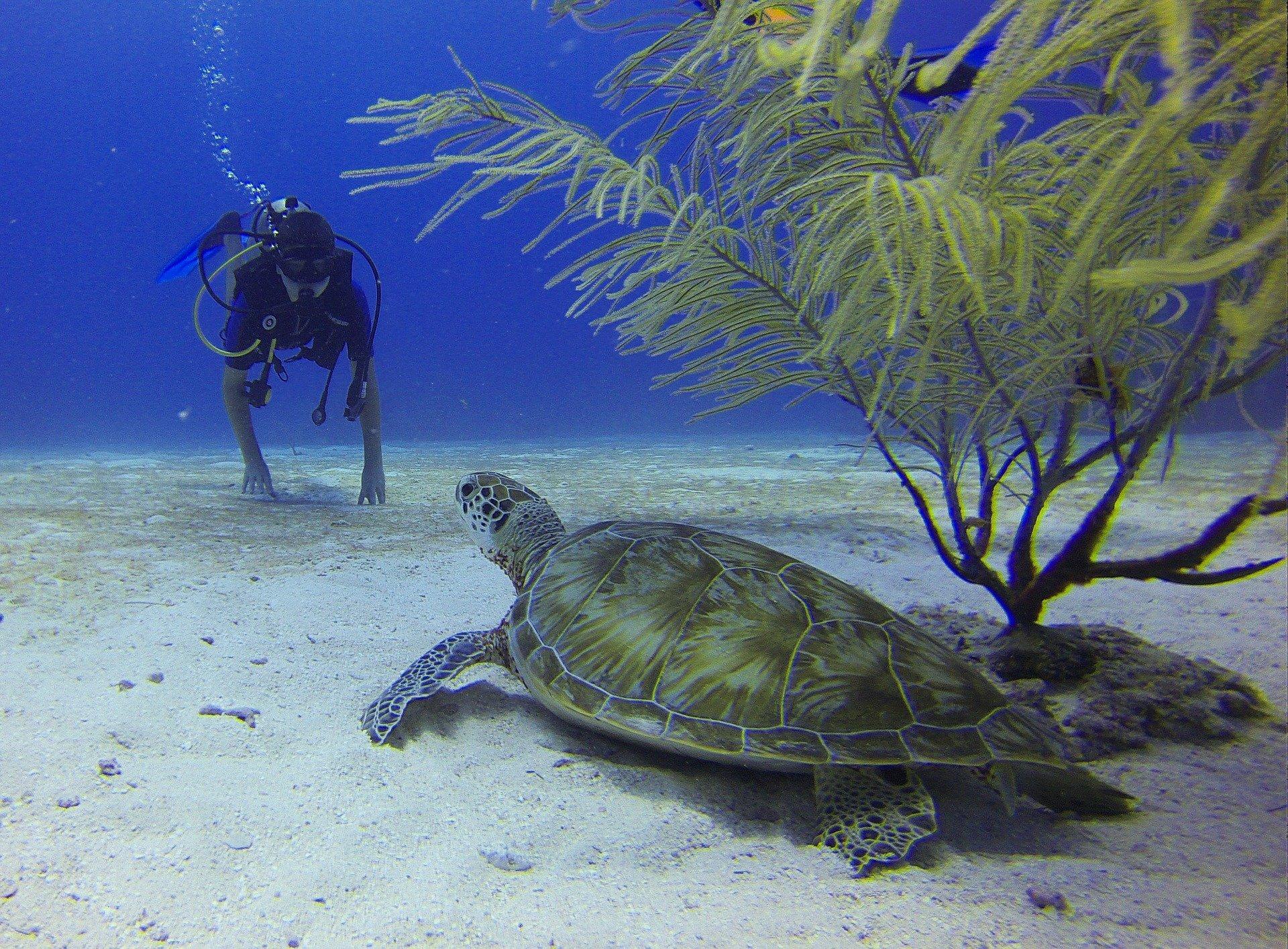 Ronioc i kornjača