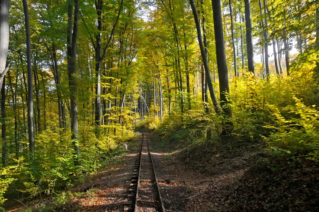 A forest railway in the Bukk Mountains