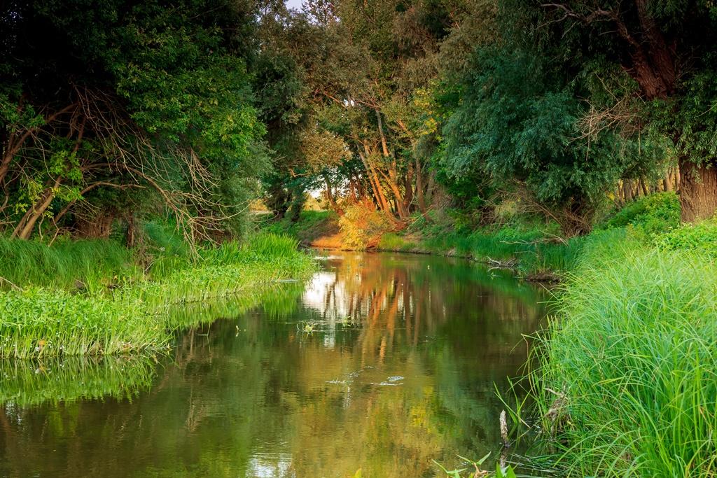 Wooded riverside landscape